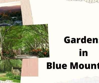Gardens in Blue Mountains